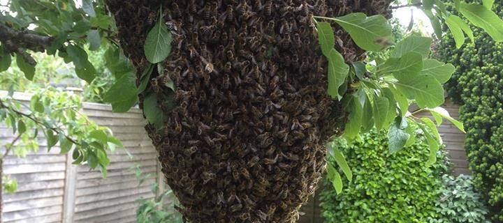 lovely-swarm